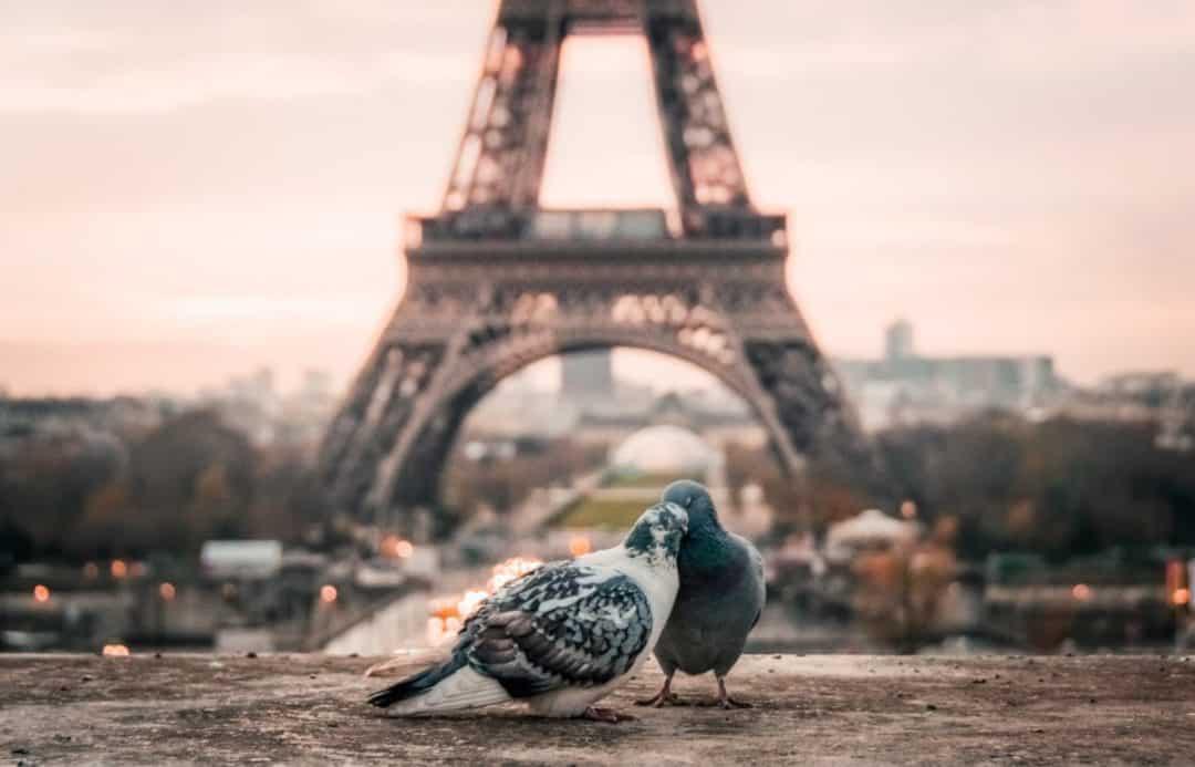 Najpiękniejsze zabytki i atrakcje turystyczne Francji